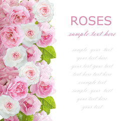 Flowers background isolated on white with sample text