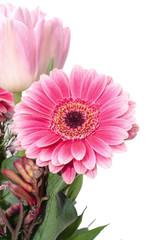 Pink Chrysanthemums, mums or chrysanths flower