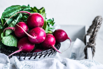 Radishes on white background