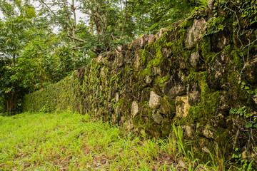 green moss on rock wall