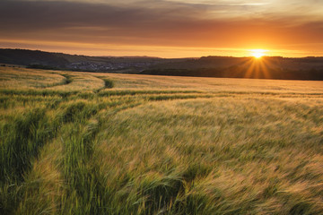 Beautiful Summer vibrant sunset landscape over agricultural crop