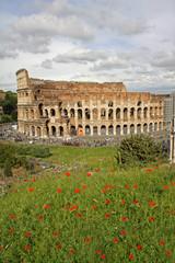 Coliseum view