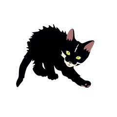 Black little kitten on a white background