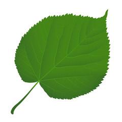 Wall Mural - leaf linden