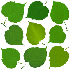 Wall Mural - linden green leaves