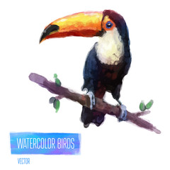 Vector watercolor style  illustration of bird.