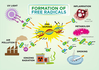 Formation of Free Radicals Diagram concept. Editable Clip Art.