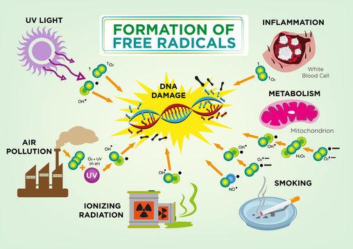Formation of Free Radicals Diagram concept. Editable Clip Art.