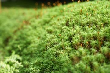 A mossy garden.