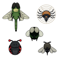 Insect animal : Dragon Fly, Spider, Fly, Mosquito and Bug