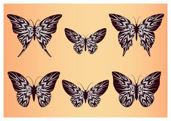 Set of butterflies on orange background