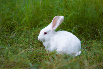 White Easter Bunny on the green grass