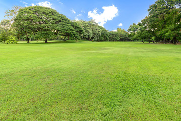 Golf course landscape with tree.