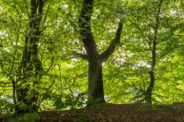 Fotoväggar - leuchtendes Laub im Wald