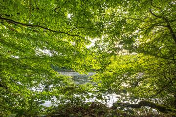 Fotoväggar - Fenster aus leuchtendem Laub