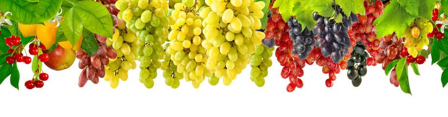 grapes in the garden Fototapete