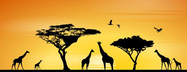 Giraffen in Savanne