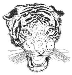 Detailed Tiger Face Vector Illustration - Handmade