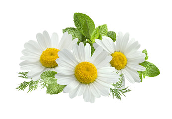 Papiers peints Marguerites Chamomile flower mint leaves composition isolated on white