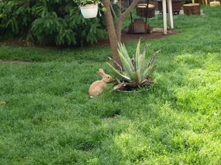 Poster Jaune bunnies