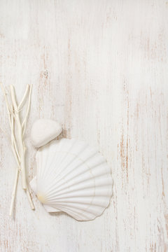 shell on white wooden background
