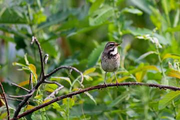 Small bird.
