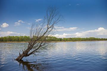 Dead tree in a lake