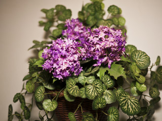 Interior plastic flower