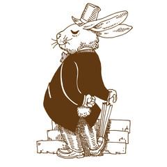 Gentle rabbit