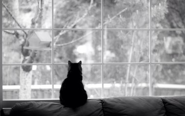 silhouette of a cat watching for birds out a window