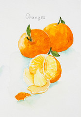 oranges'watercolor  painted