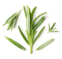 Rosemary twig isolated