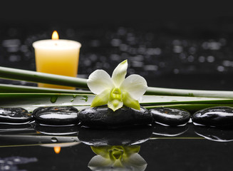White orchid with plant with candle on black stones