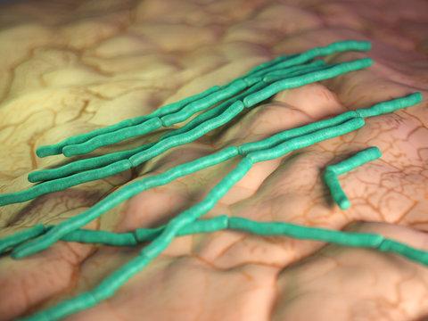 medical bacteria illustration of the Bacillus cereus