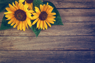 Sunflowers on an old wooden background