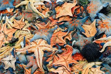 a heap of starfish