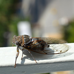 Big Fly on the white surface with blurred background