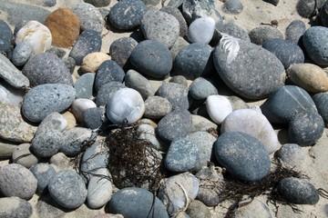Kieslstein am Strand in Nahaufnahme