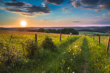 Wall Mural - Dissappearing Trail into the horizon in german countryside with