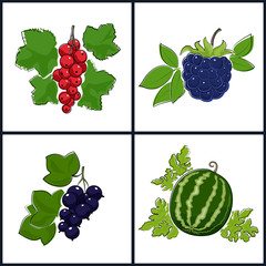 Redcurrant,Blackcurrant,Watermelon,Blackberry