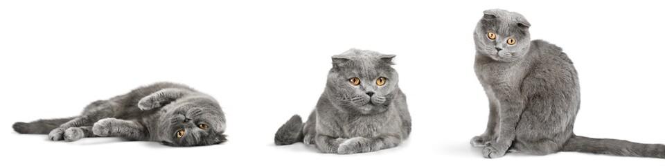 Cat, cats, kitty.