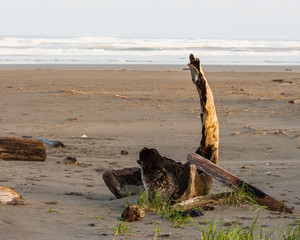 Burnt driftwood on the beach