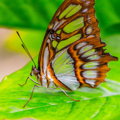 Beautiful butterfly on the plants in Mexico