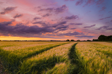 Acrylic Prints Village Sunset over a wheat field