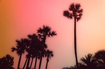 Vintage Palms