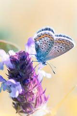 Сopper-butterfly