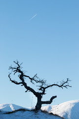 Dead tree on a mountain top