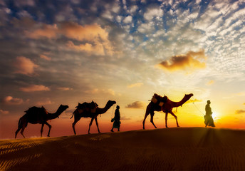 Two cameleers camel drivers with camels in dunes of Thar deser