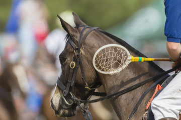 Polo-Cross horse  rider racket closeup unidentified equestrian sport