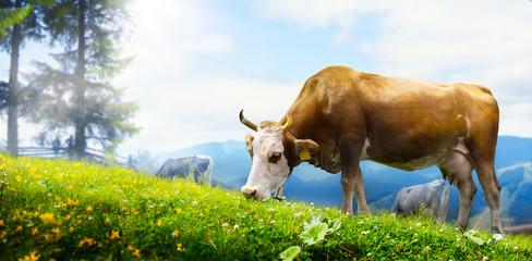 art cow grazing in a mountain meadow